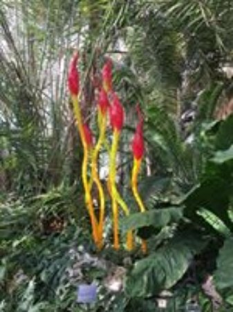 Phipps Conservatory and Botanical Gardens: One of many Chihuly sculptures scattered through out