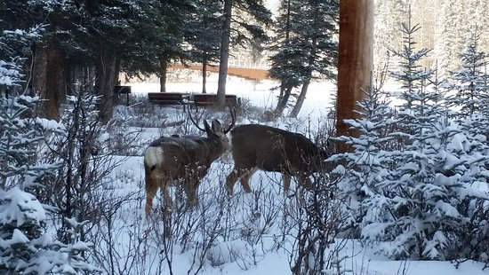 Bow View Lodge: Some native wildlife along the Bow River Trail