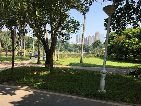 Shenzhen University: 緑豊かなキャンパス