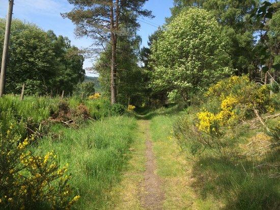Aviemore, UK: The Speyside Way