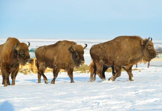 Park of Ice Age Animals