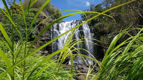 "Patumahoe, Selandia Baru: More Than Something to ""Reed"" About"