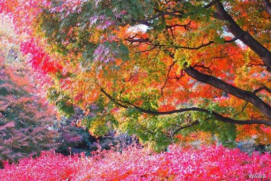 Sakuragaoka Sumireba Natural Garden