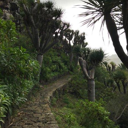Jard n bot nico canario las palmas de gran canaria lo que se debe saber antes de viajar - Jardin botanico las palmas ...
