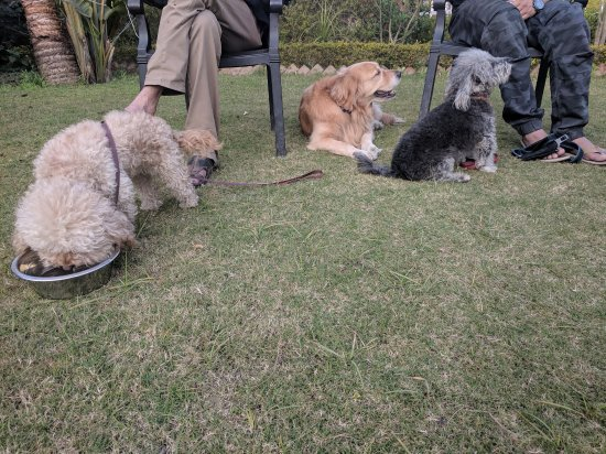 Garhmukteshwar, India: Our dogs enjoying the evening sitting in the lawn