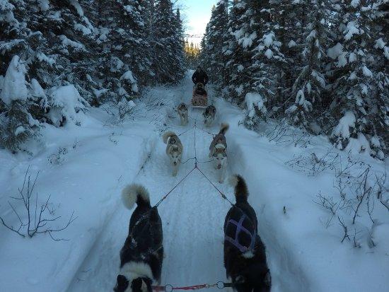 Charlevoix, Canada: Belle virée avec Toby et ses chiens
