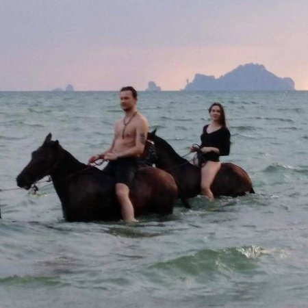 Krabi Nature Horse Riding: swimming with horses