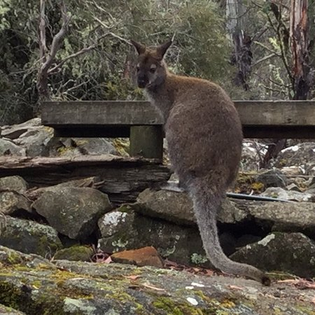 Miena, Australia: photo3.jpg