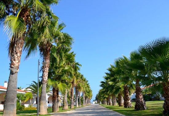 Villaggio arcobaleno prices resort all inclusive reviews vieste italy tripadvisor - Villaggio giardini naxos all inclusive ...