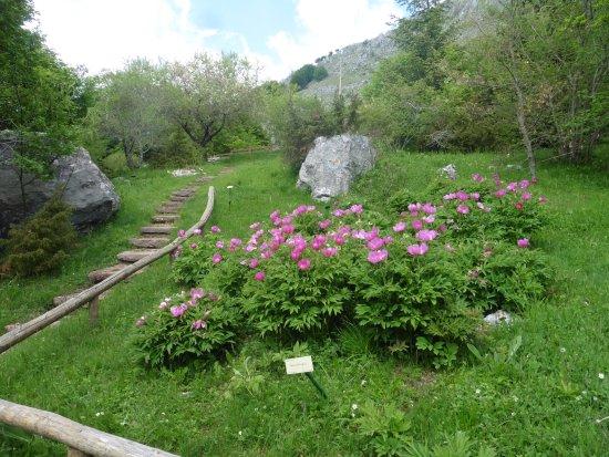 Botanical Garden Maria Ansaldi Pania di Corfino