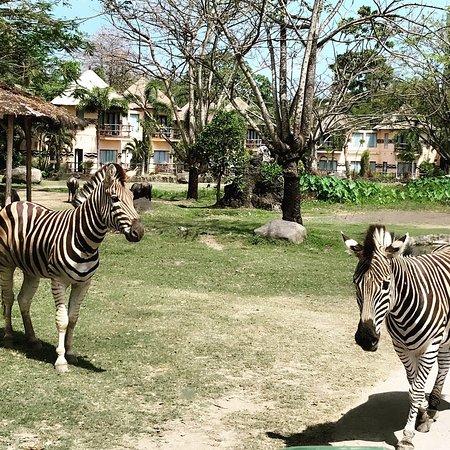 Mara River Safari Lodge: photo6.jpg