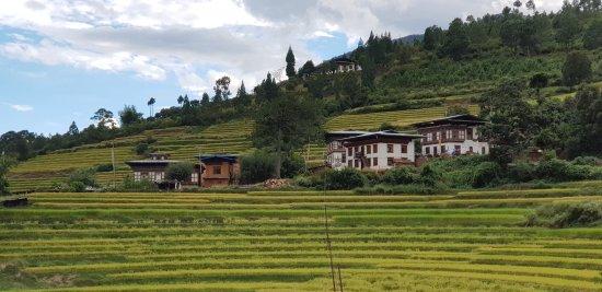 Rice fields views