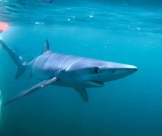 Montauk, Nova York: Shark diving