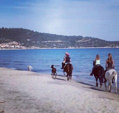 Sarti, Grecia: Ausritt mit Kindern am Meer und super lieben Pferden !