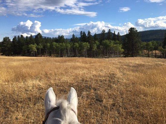 Windover Equestrian