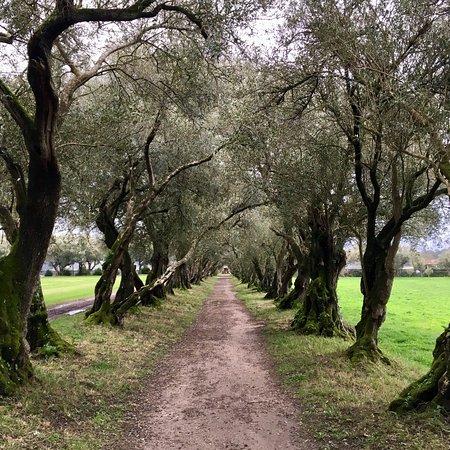 Vedra, Espagne : photo4.jpg