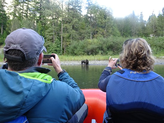 Pemberton, Kanada: Scenic Grizzly Bear Viewing in the Great bear Rainforest with Yoho Adventures