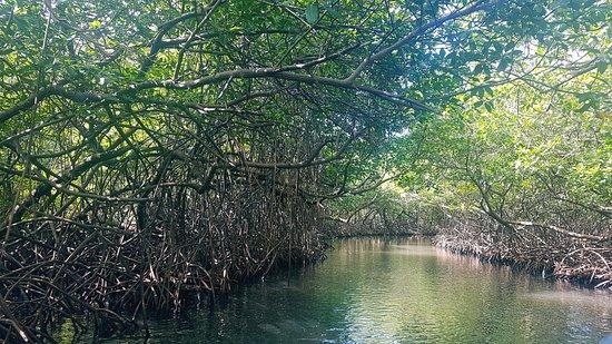 Nueva Gorgona, Panamá: La Mangrove des Caraîbes