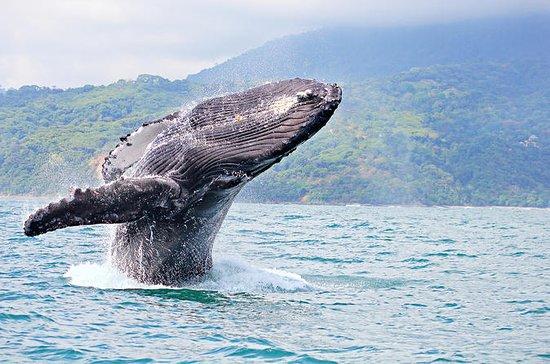Catamaran Cocktail Whale Watch Cruise