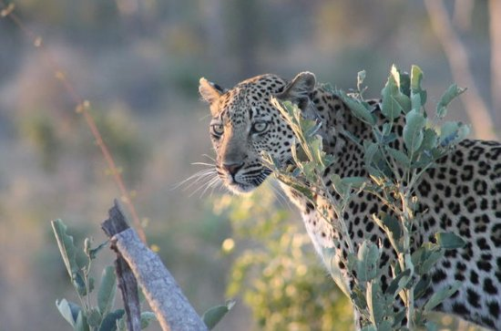 1night 2days Express Kruger National