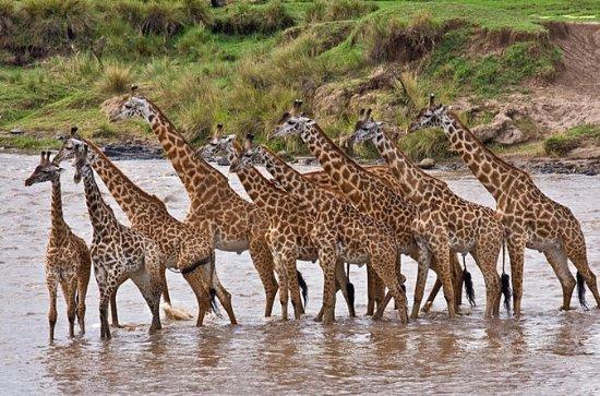 4 días: Amboseli, Tsavo West y Tsavo...