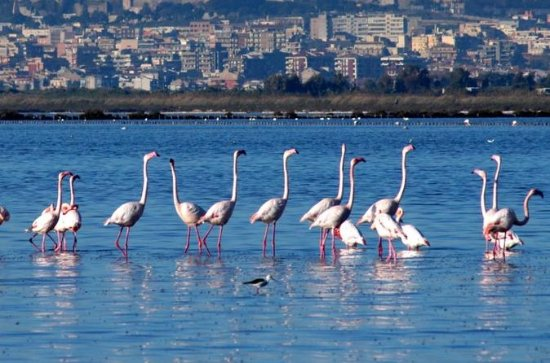 Flamingos Sightseeing Segway Tour