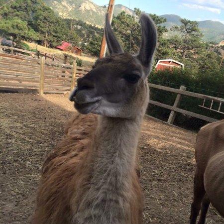 Keno's Llama Ranch & Guest House : photo2.jpg
