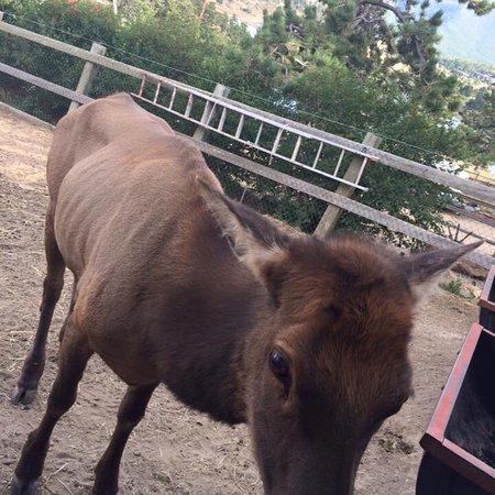 Keno's Llama Ranch & Guest House : photo3.jpg