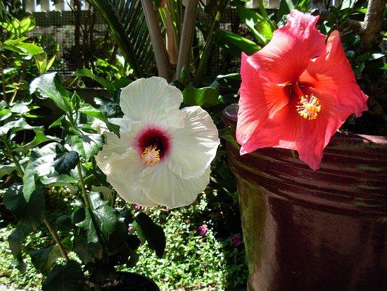 Karin's Garden Villa B&B: Beautiful flowers