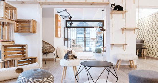 Suara Foundation Cat House