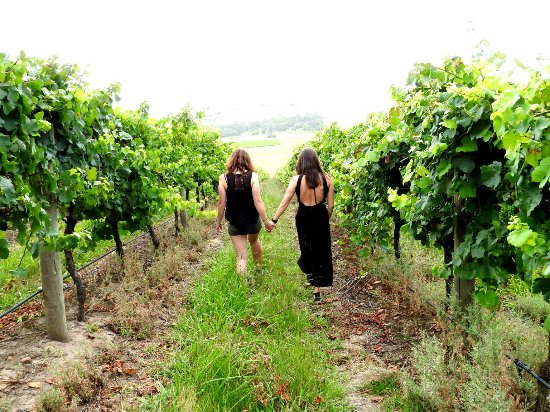 Big Grape Winery Tours