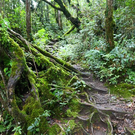 Cameron Highlands Trail No. 10: photo0.jpg