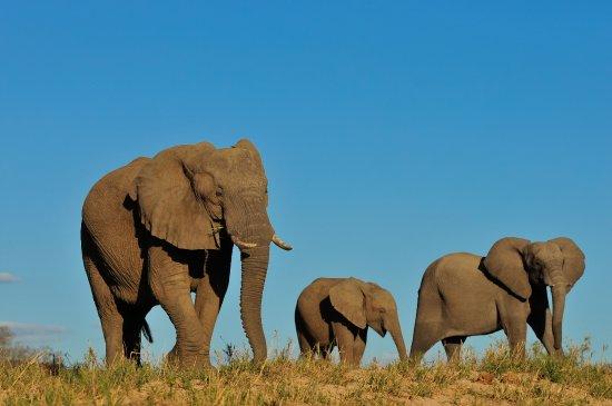 Inyati Private Game Reserve, แอฟริกาใต้: #GetStartedTraveling