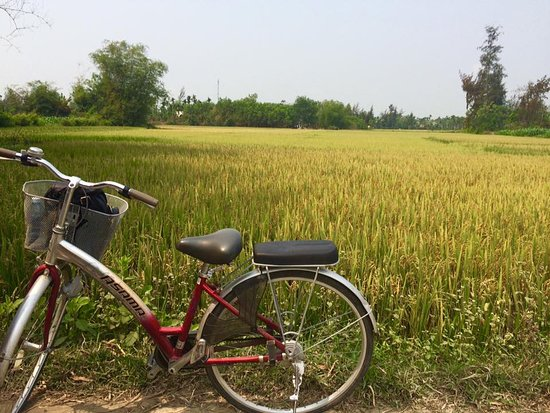 Heaven and Earth Bicycle Tours: Cycling through rice fields