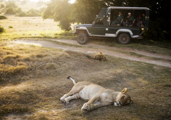 Paterson, South Africa: Game Drive at Schotia Safari Private Game Reserve