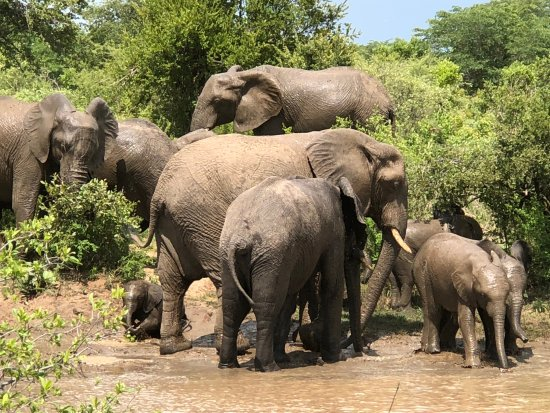 Miombo Safari Camp: the elephants at the watering hole off the park