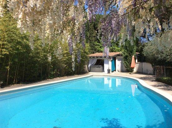 Castillon-du-Gard, Frankreich: La grande piscine avec la glycine