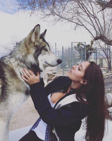 Lucerne Valley, كاليفورنيا: wolf playdates