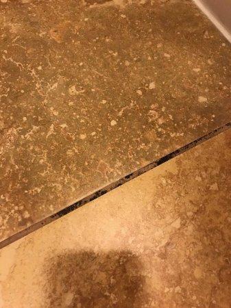 Hampton Inn Orlando/Lake Buena Vista: Gross black MOLD on the tile floors all over the bathroom, Room 312.