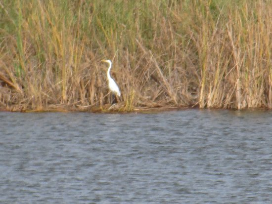 Mission, TX: Heron