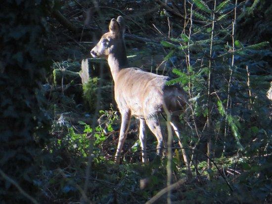Parkend, UK: Wildlife