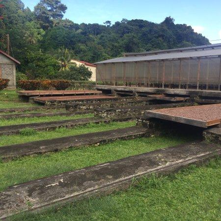 Belmont, Grenada: photo0.jpg