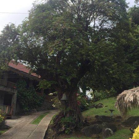 Belmont, Grenada: photo2.jpg