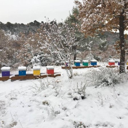 Saint-Martin-de-Bromes, Francia: Rucher sous la neige
