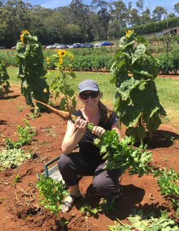 Yarra Valley, Australia: The last of the parsnips