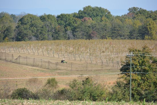 Jonesville, NC: A look at our vineyard blocks across the road from the Tasting House