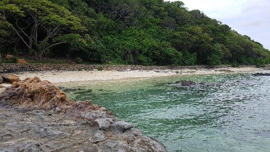 Castaway Island Day Trip: 20180110_123047_large.jpg
