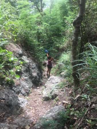 Wayalailai Ecohaven Resort: Hike trail