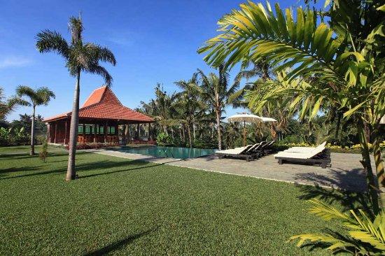 Pertiwi Bisma 2 Ubud Bali Hotel Reviews Photos