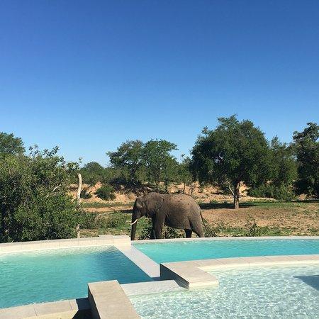 Ngala Private Game Reserve, Sudáfrica: photo4.jpg
